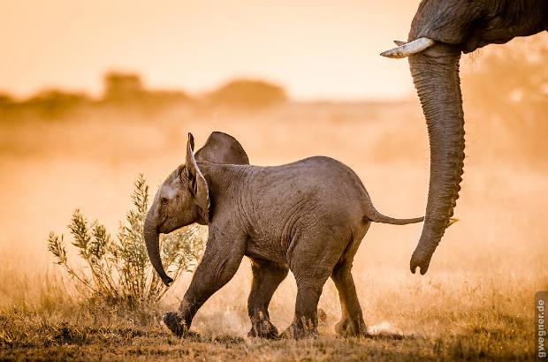 Safari: Elefanten