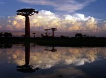 Madagaskar, Baobabs bei Morondava