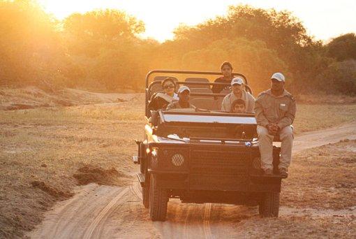 Auf Safari Tiere beobachten